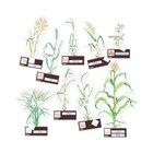 Getreidearten bestimmen leicht gemacht, 6-10 Jahre