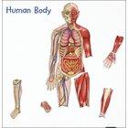 Der menschliche Körper, magnetisches Demomaterial, 3.-4. Klasse