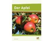 Der Apfel, 1.-2. Klasse