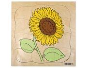 Wachstumspuzzles - Sonnenblume