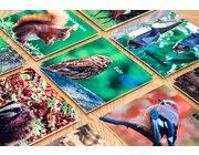 Bodenspiel Memo - Lebensraum Wald