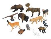 Tiere - Nordamerikanische Tiere, 12 Teile