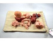 DIY-Kit Menschliche Organe Figuren