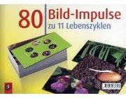 80 Bild-Impulse zu 11 Lebenszyklen, Bildkarten, 1.-4. Klasse