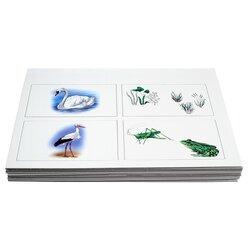 Kon-Lab Kartensatz Die Vogelwelt, 0-10 Jahre