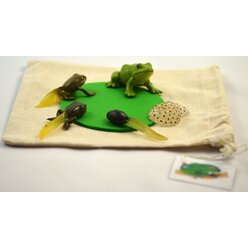 DIY-Kit Lebenszyklus Frosch