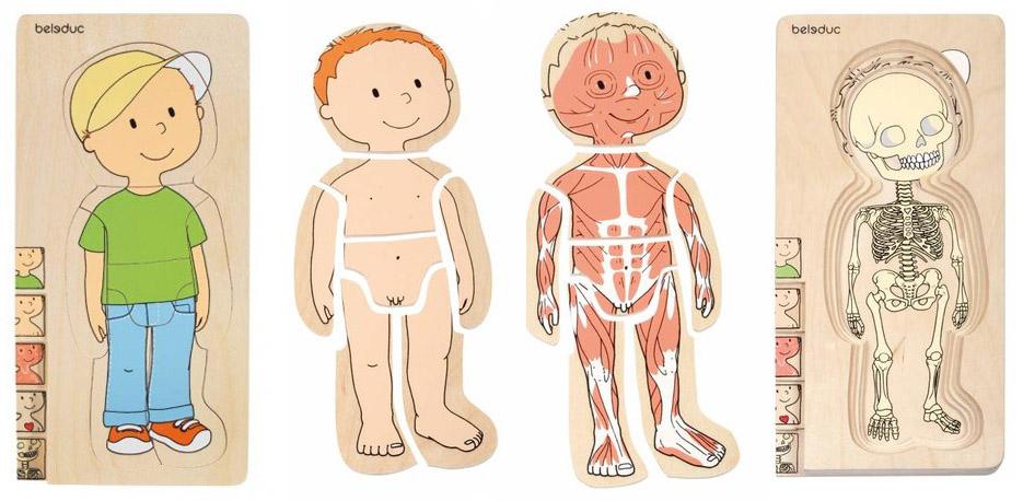 Puzzlespiel Dein Körper Junge Lagenpuzzle