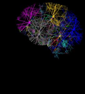 Neurologische Störungen im Gehirn liegen bei einer ADHS vor